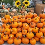 graff,gardens,&,Farm,Fall,pie,Pumpkins2