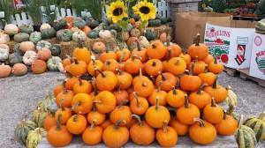 graff,gardens,&,Farm,Fall,pie,Pumpkins2