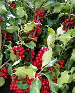 graff.garden.berried.holly