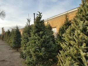 Christmas Treed