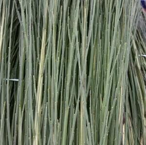 graff.garden.scotch.broom